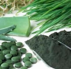 chlorella blog1