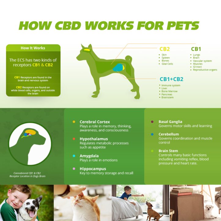 how-cbd-works-for-pets-800x800
